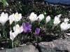 garden-pic-flowers