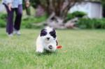 normal_puppy-10