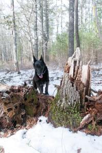 WoodsWalk_10
