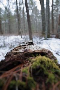 WoodsWalk_12