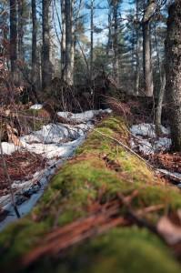 WoodsWalk_9