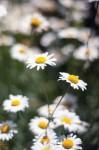 GardenTour_5