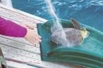 Turtles_1708183